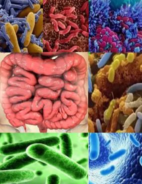 Дисбактериоз. Что это такое