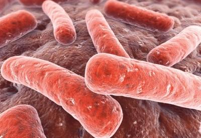Палочки туберкулез