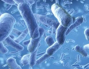 Болезнетворные микробы человека