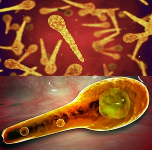 Столбнячная палочка (Clostridium tetani)